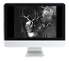 Clinical Abdominal Imaging Review Online Course